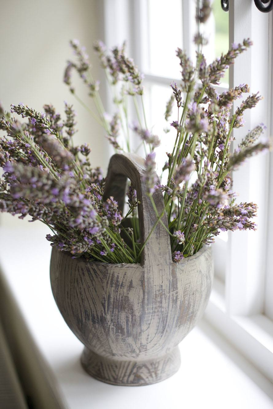 naddar - Lavender IMG_5658.jpg