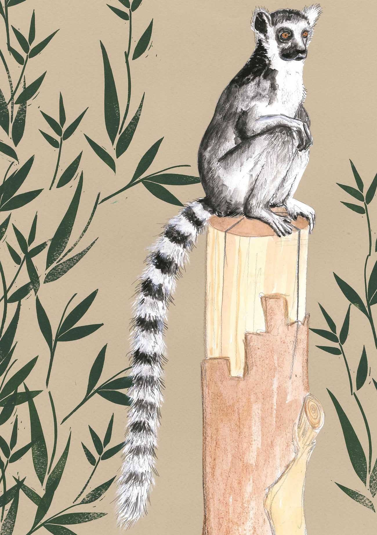 zb ring tailed lemur.jpg