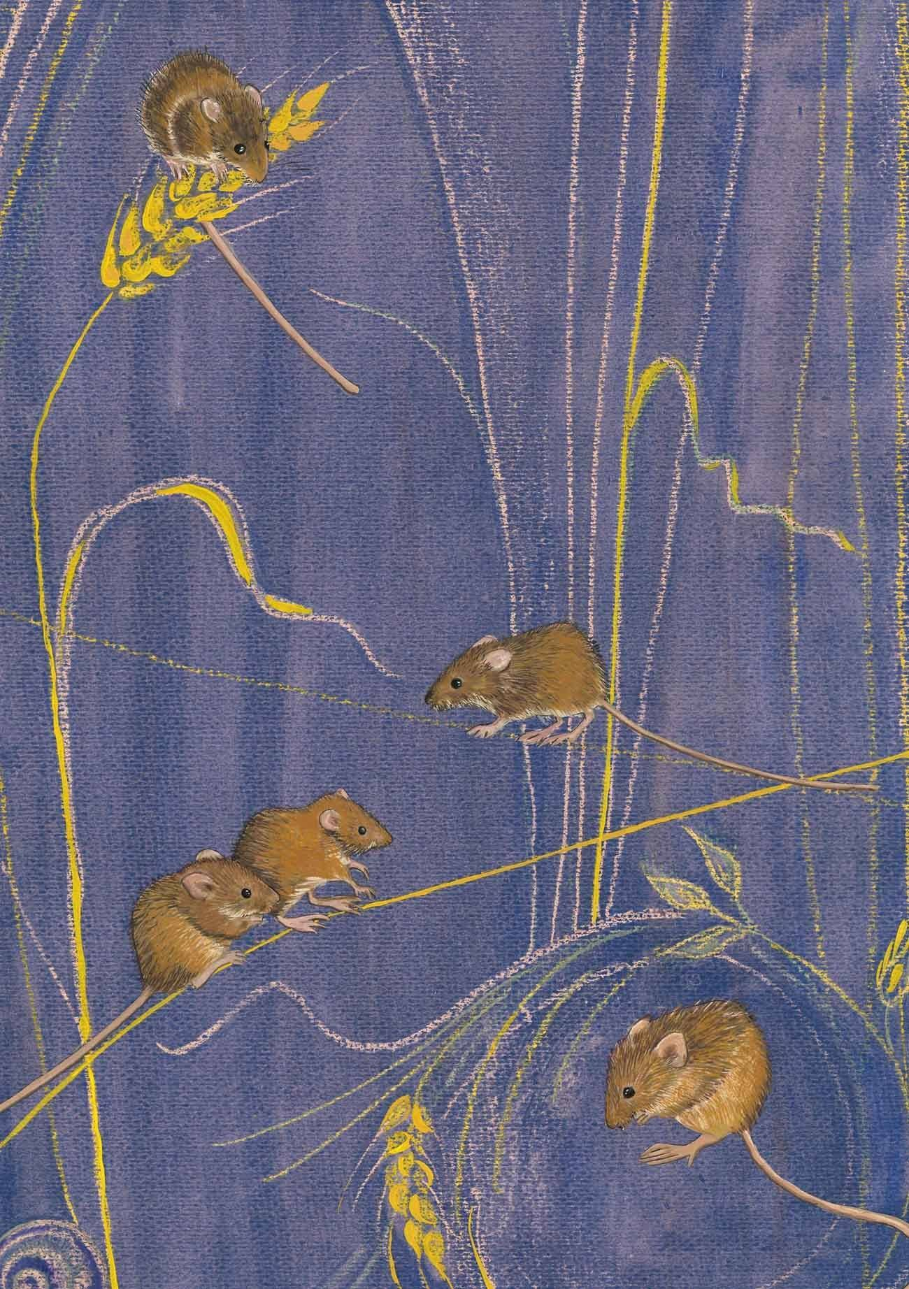 zb harvest mice.jpg