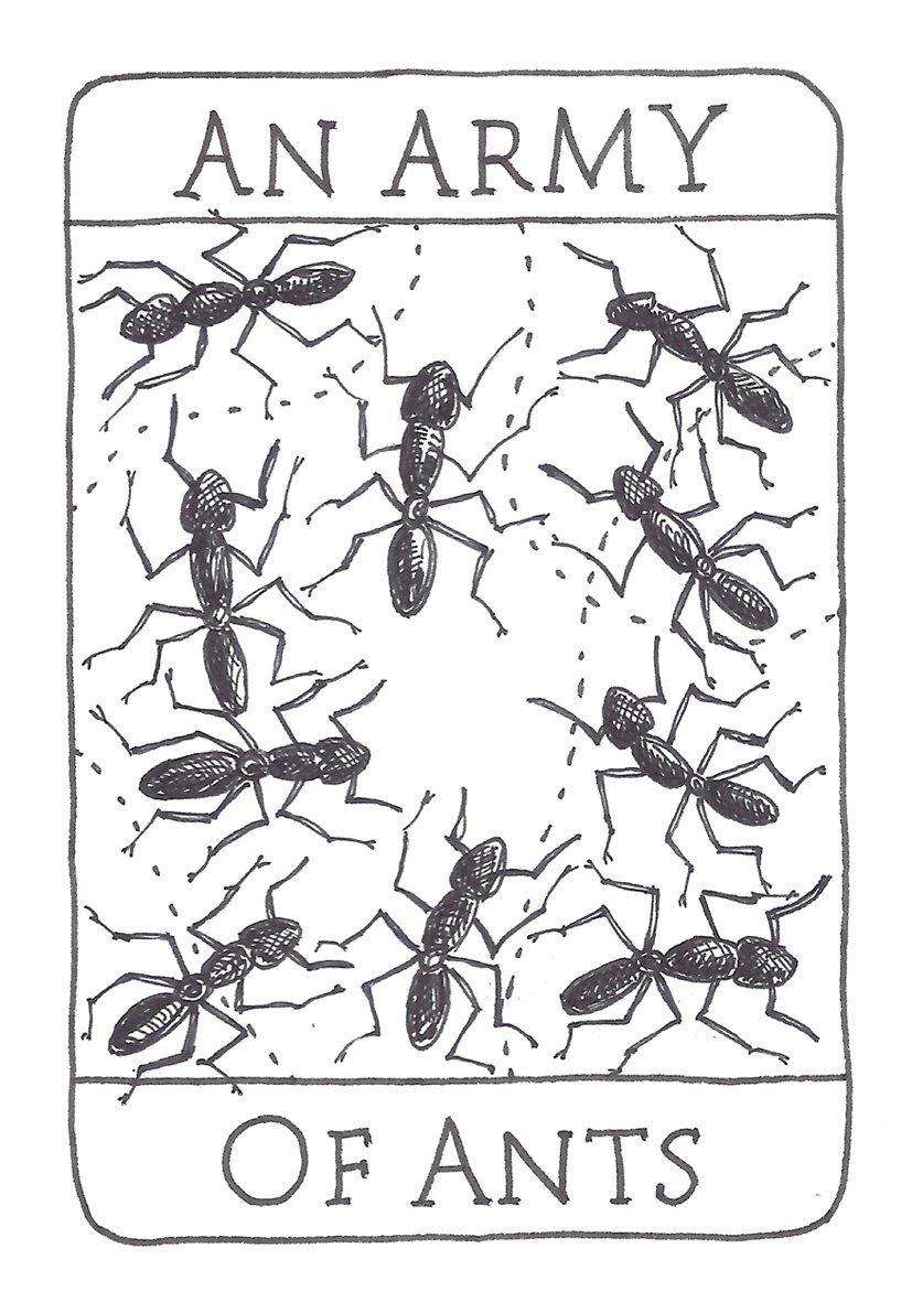 army of ants.jpg
