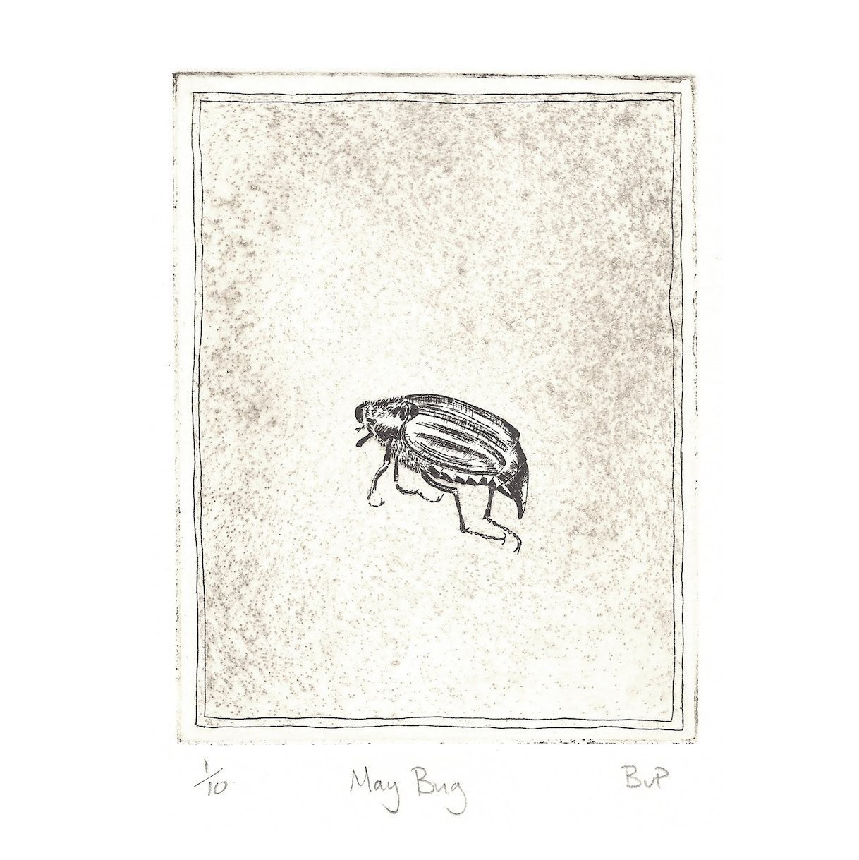 zb May bug aquatint.jpg