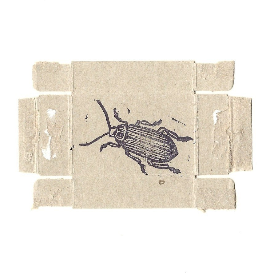 zb alexander beetle.jpg