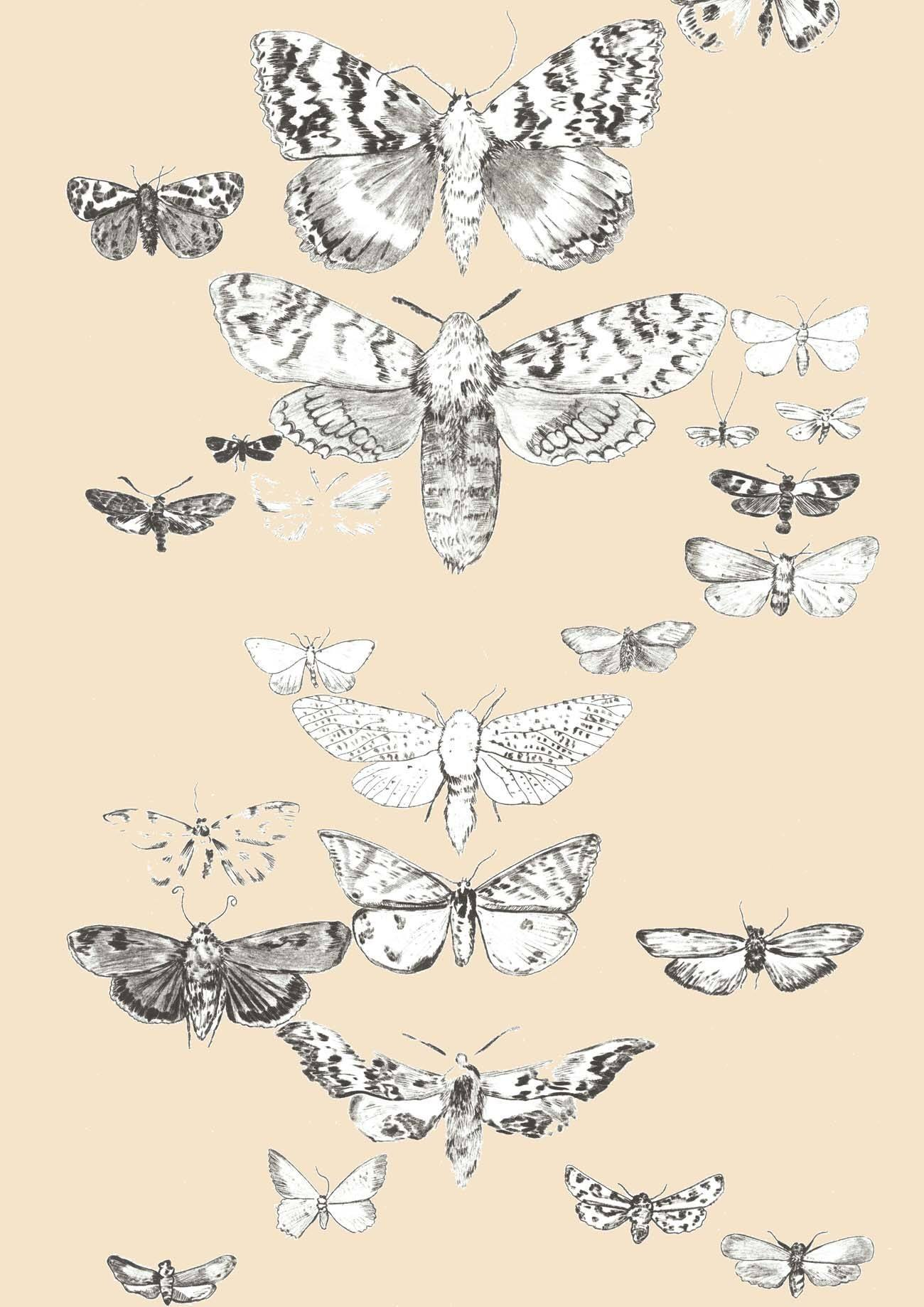 zb british moths drypoint.jpg