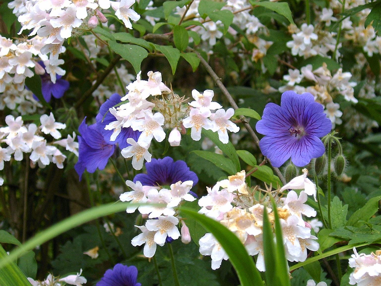 Abbots Ripton Flowers.jpg
