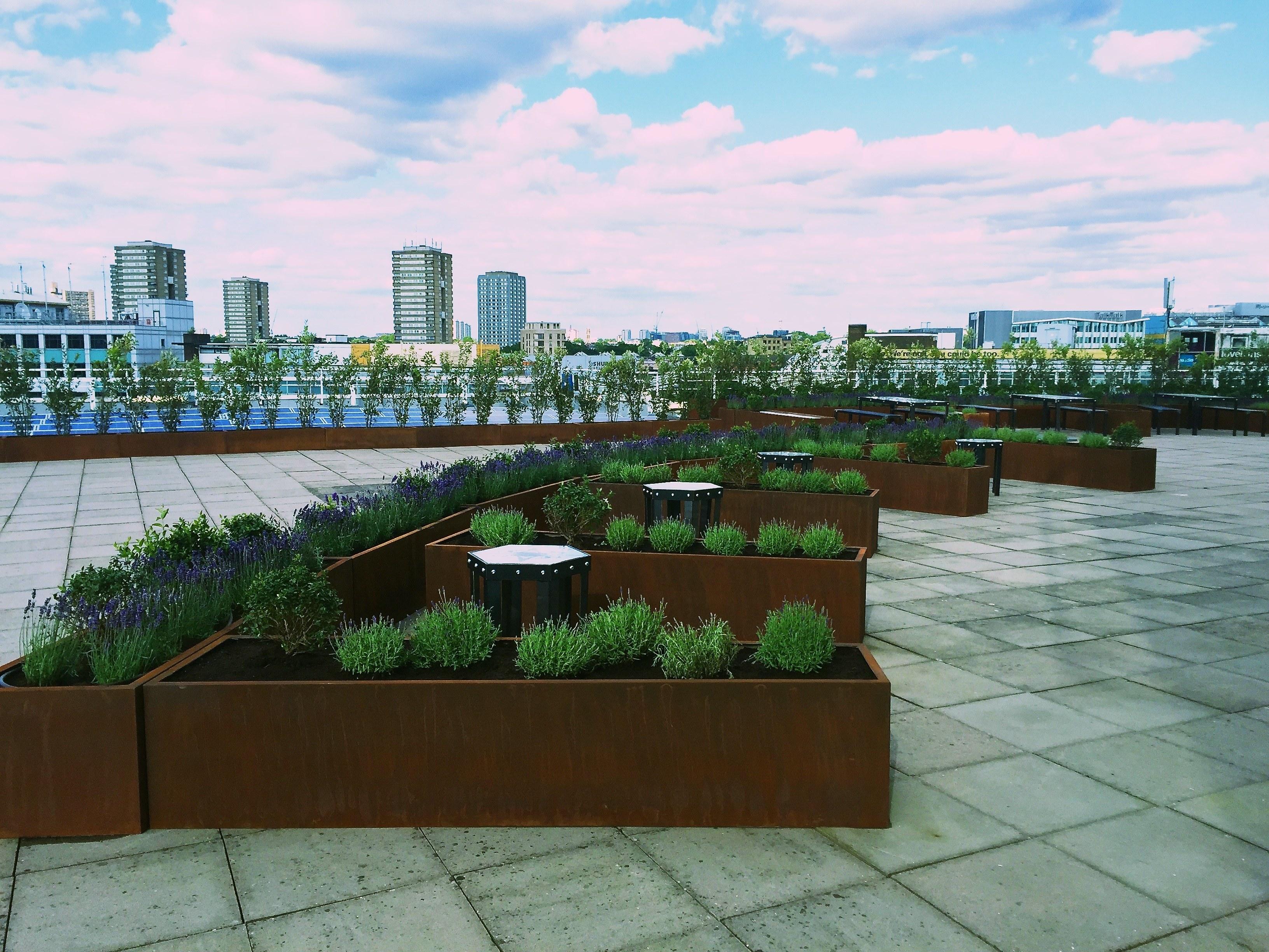 BBC Worldwide Roof Garden by Land Designs