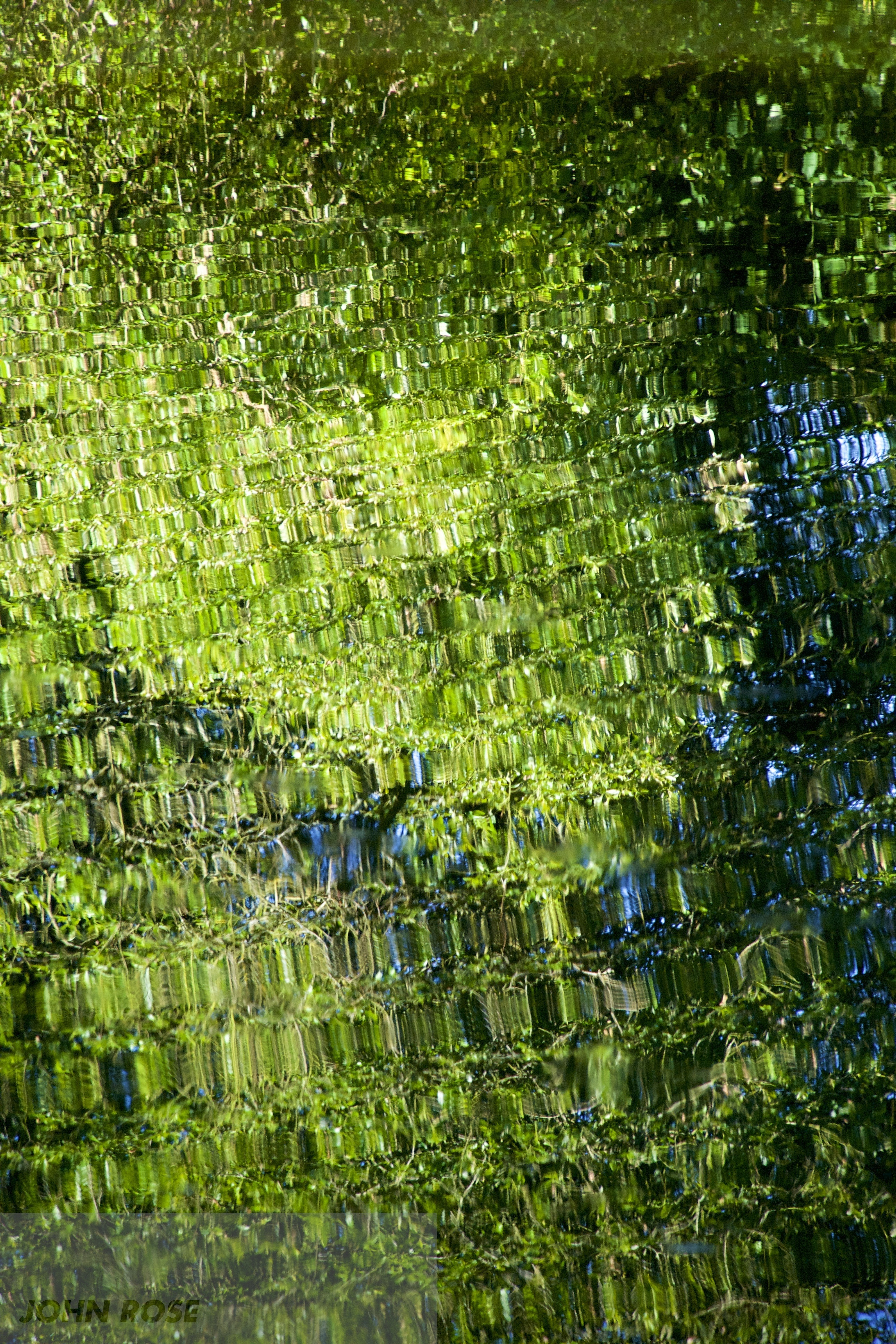 John Rose Photographic artwork of pattern in nature Summer warm fish sipping flies gentle alter sunlit tree