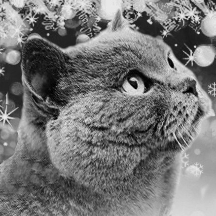 1421166272doorstep-cat-eb-2.jpg