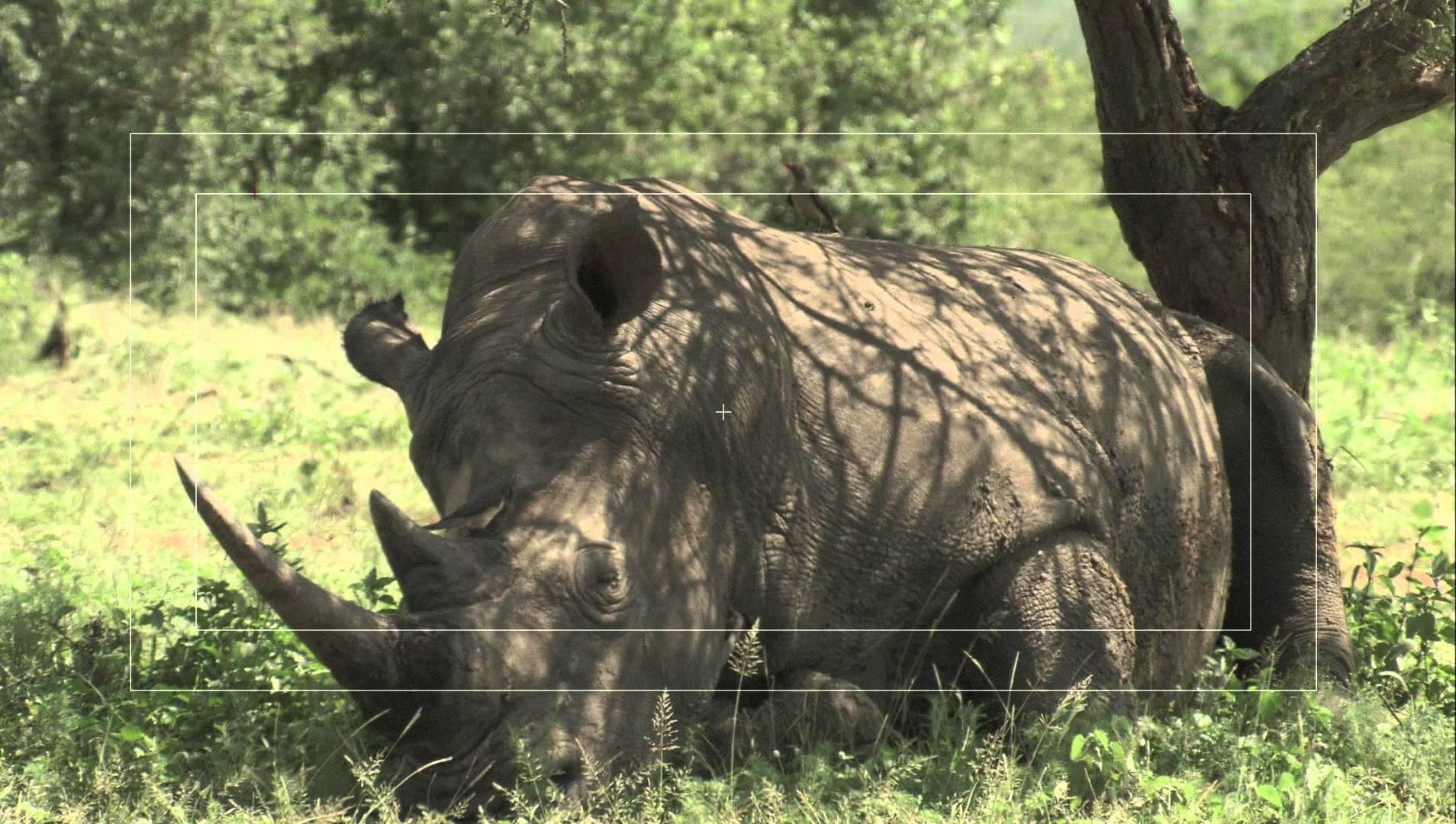 Google Impact Challenge, Rhino.jpg