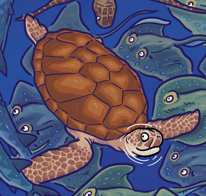 Sea Turtle illustration from Treasure Beyond Measure