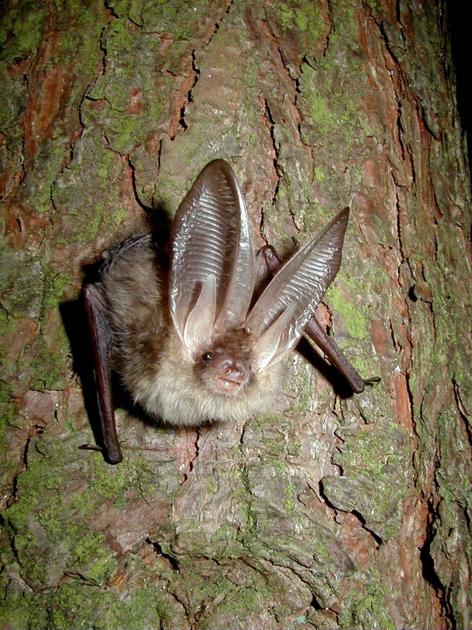 BATS & TREES image