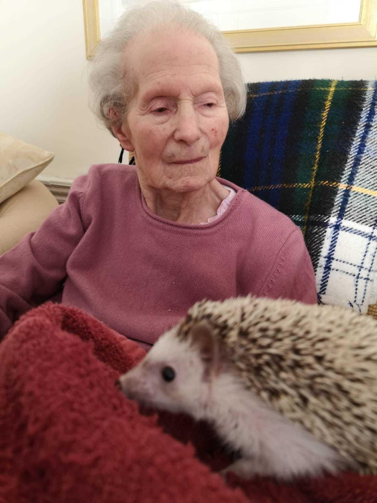 Meeting a hedgehog