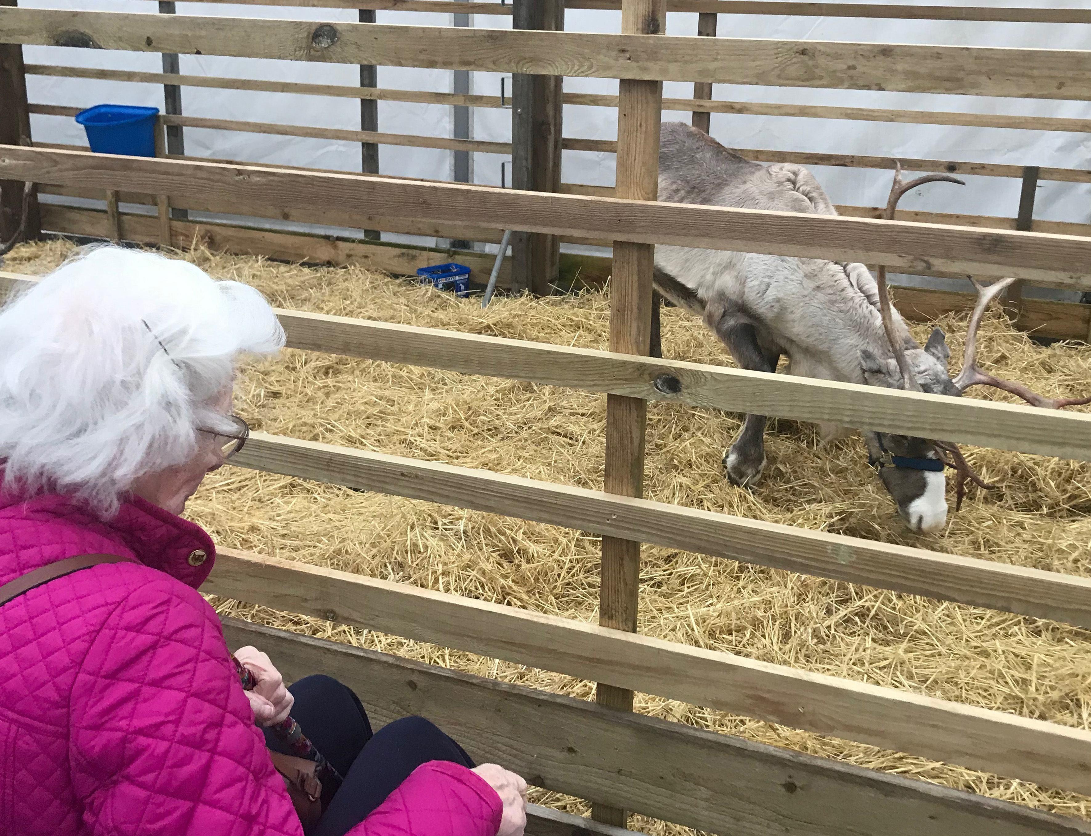 Ella and the reindeer