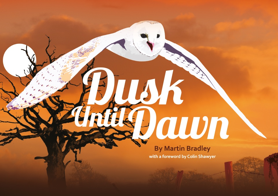 Cover for Dusk Until Dawn from Ceratopia Books