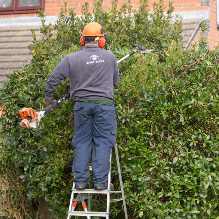 DSB Garden Services hedge trimming