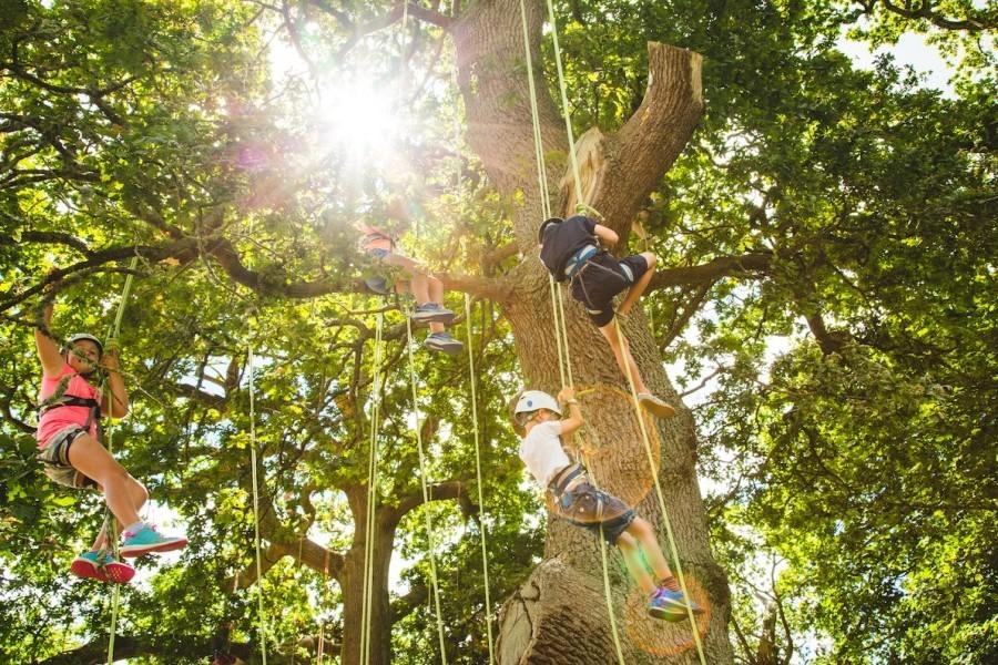 Wild Tree Climbing image