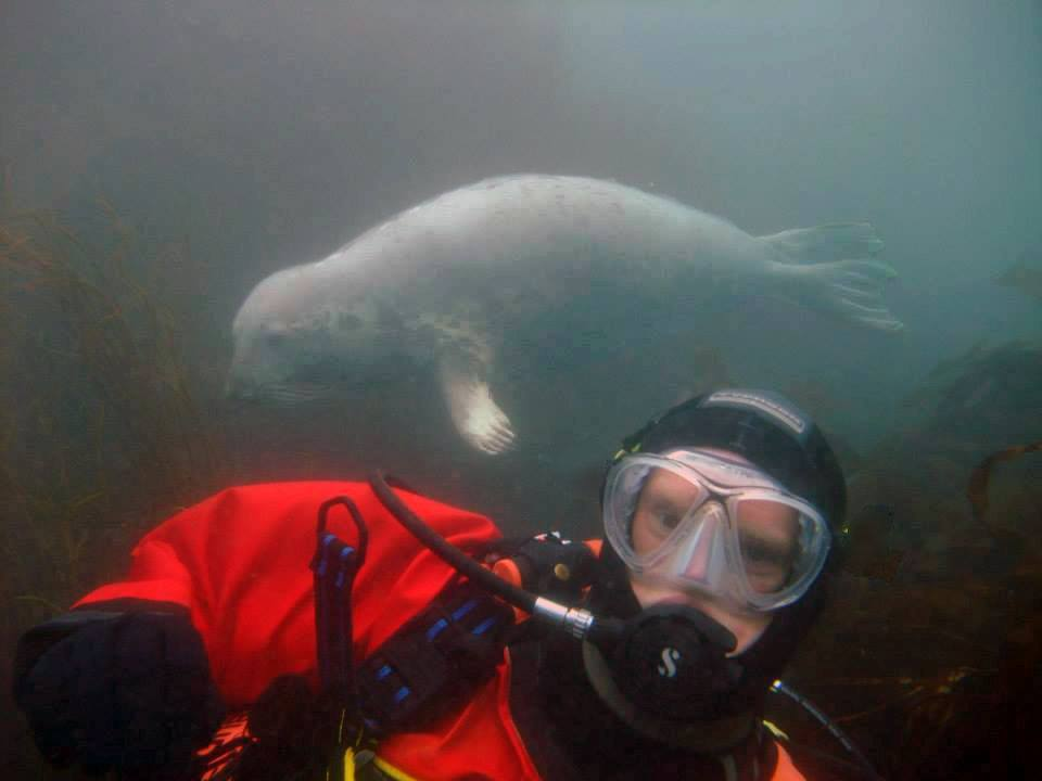 Diving with the Lundy Island Seals image