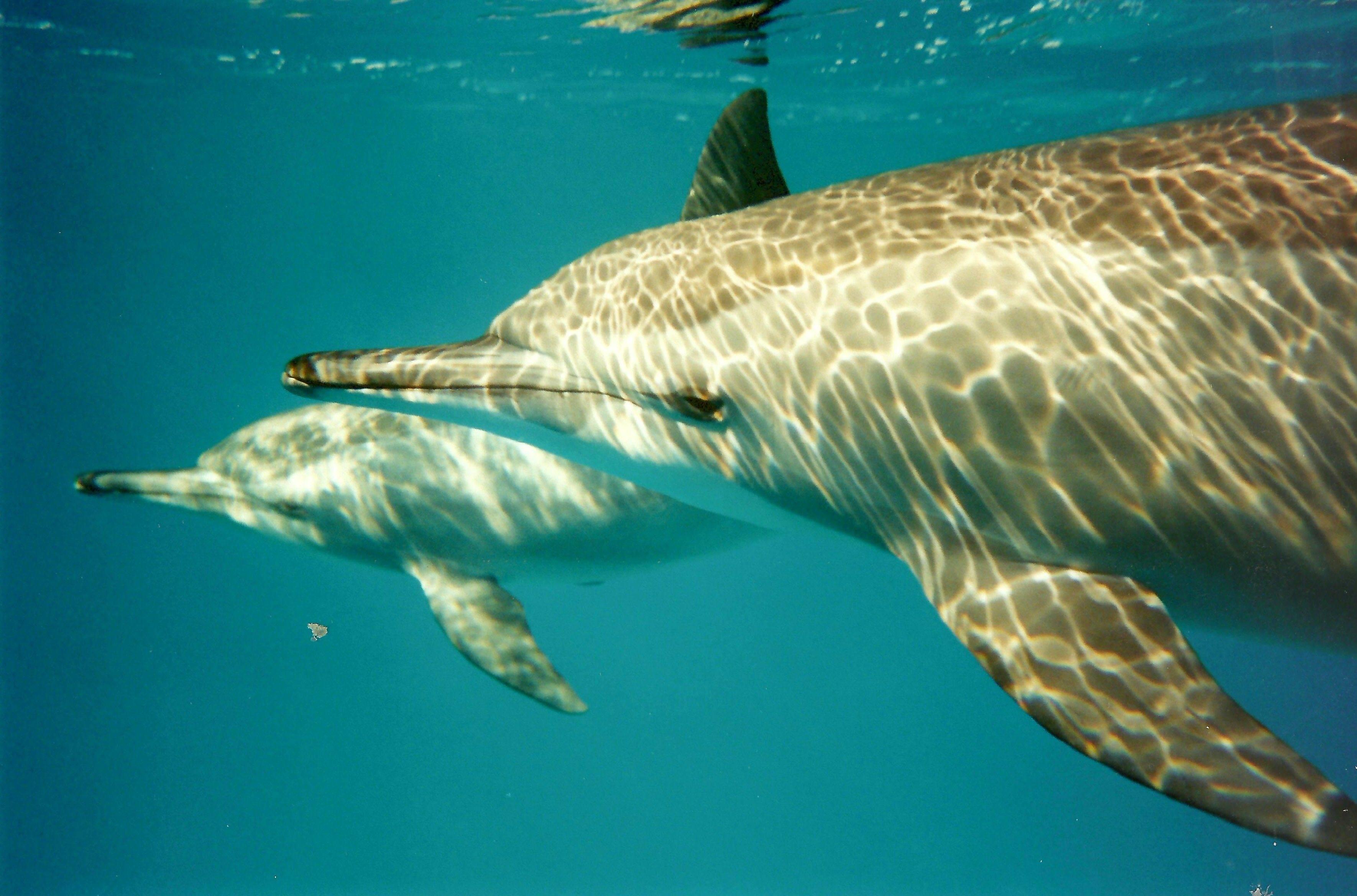 488C5E59-F3C6-Dolphins (Redsea).jpg