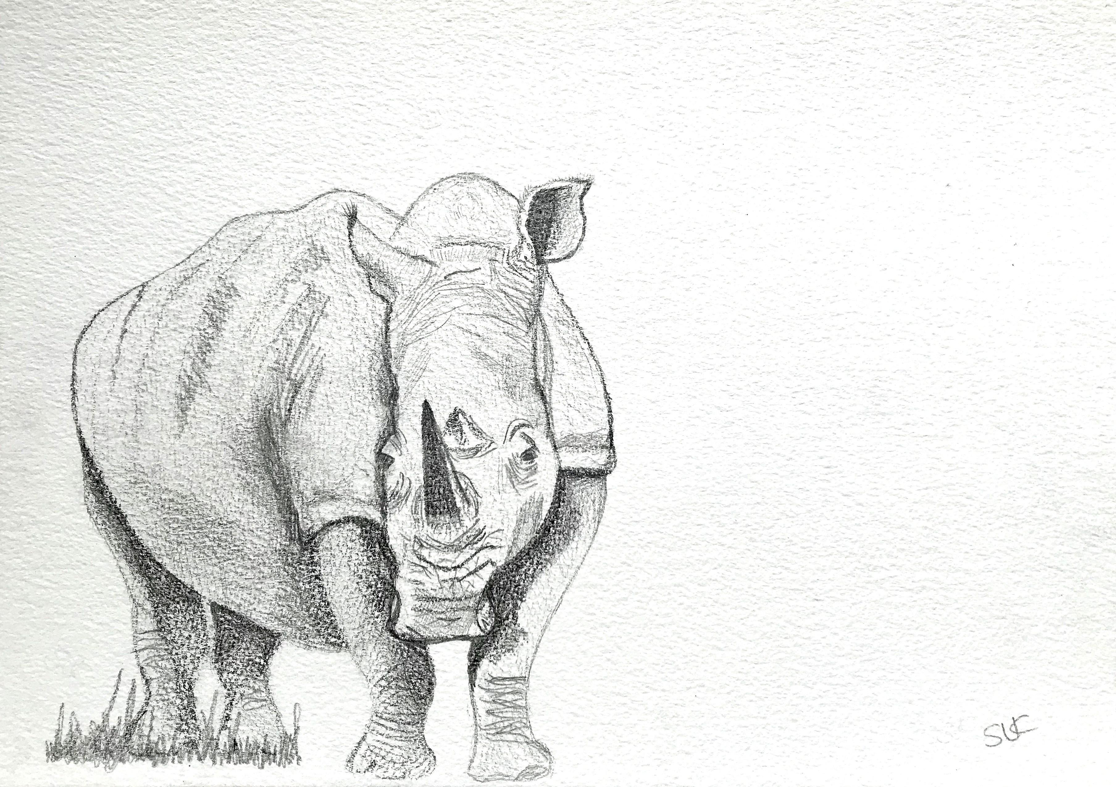 Rhino Grazing.jpg