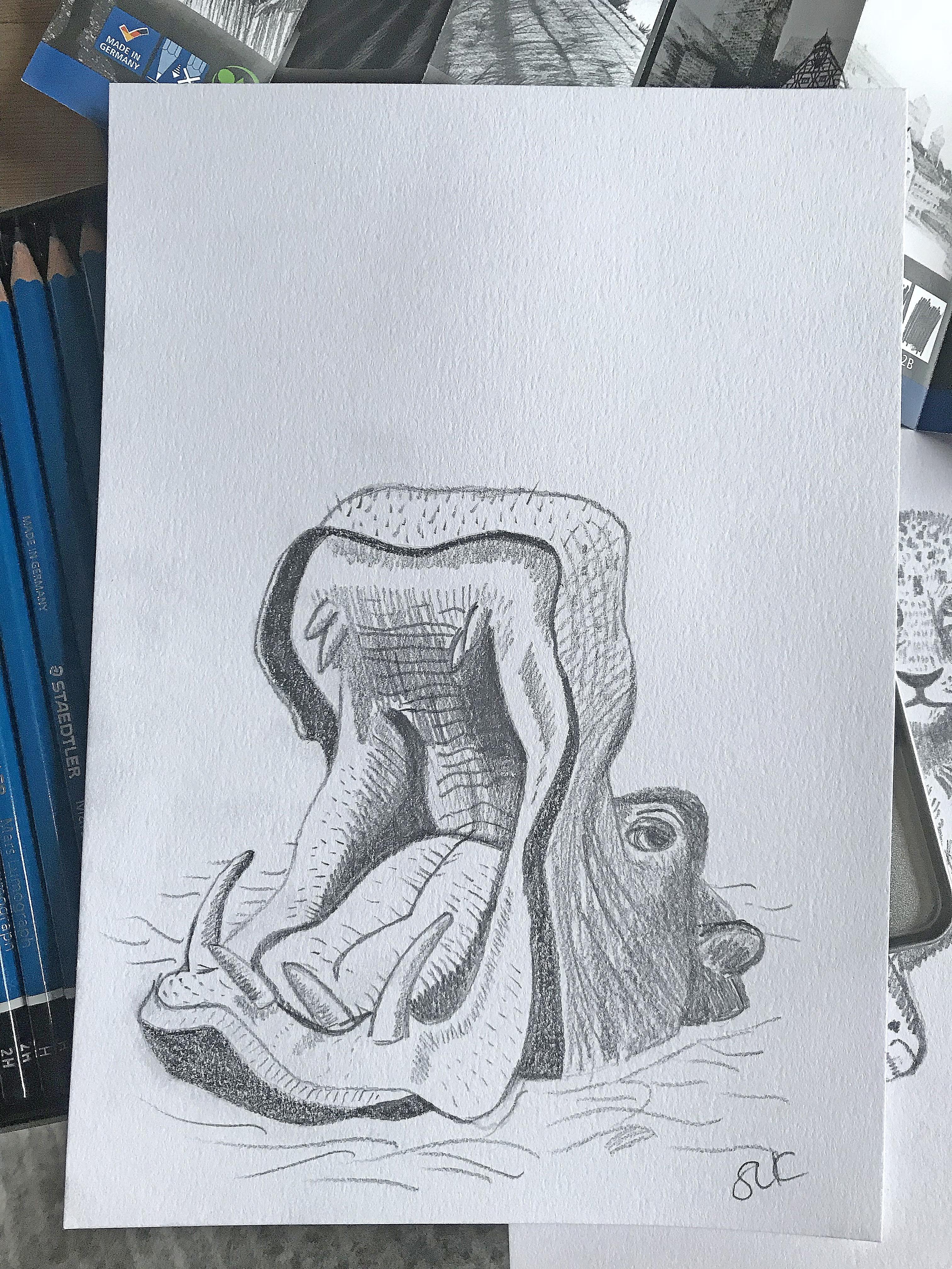 Hippo Yawn.jpg