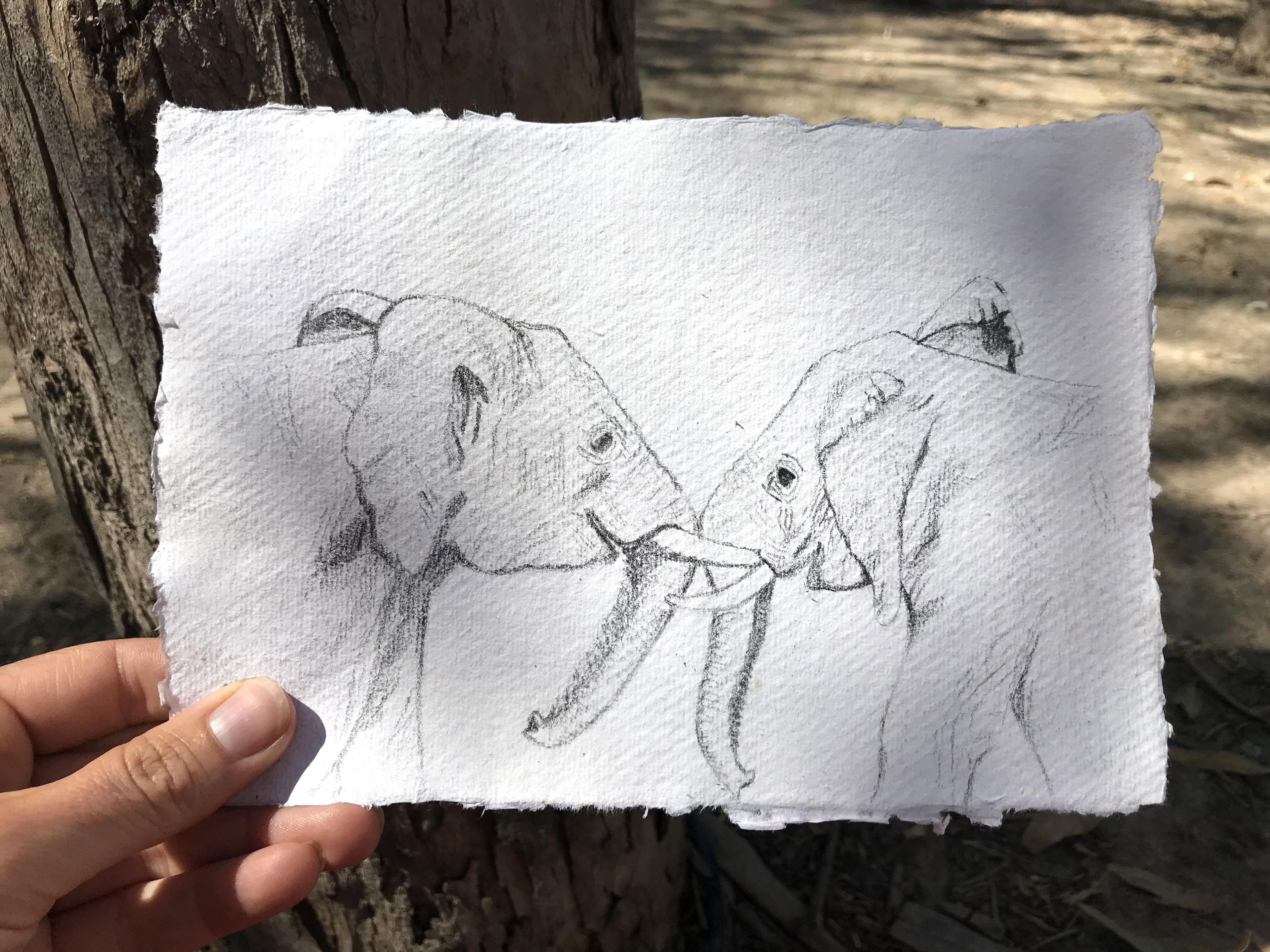 Tarifa Elephants.jpg