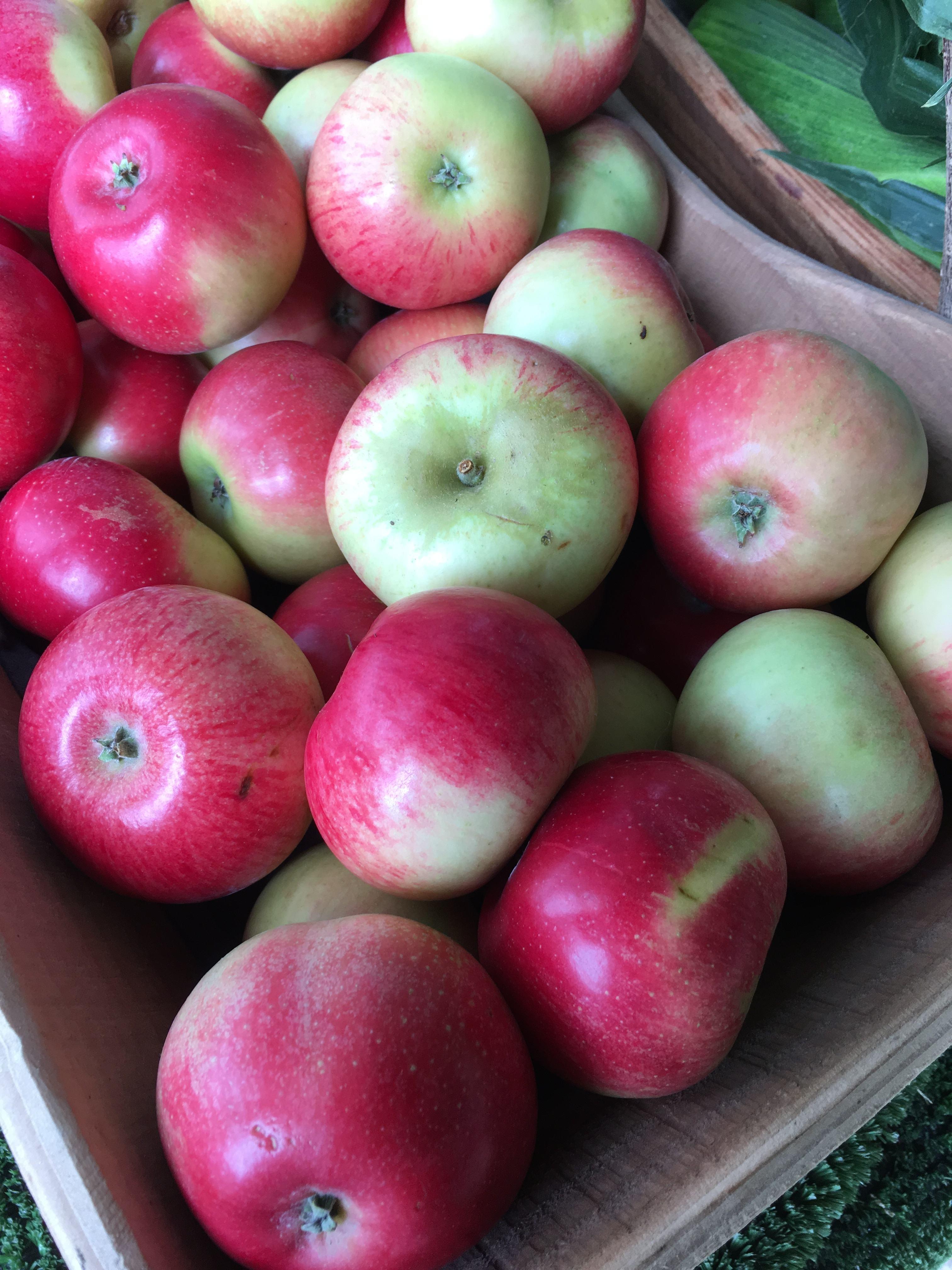 Apples in trug close up.JPG