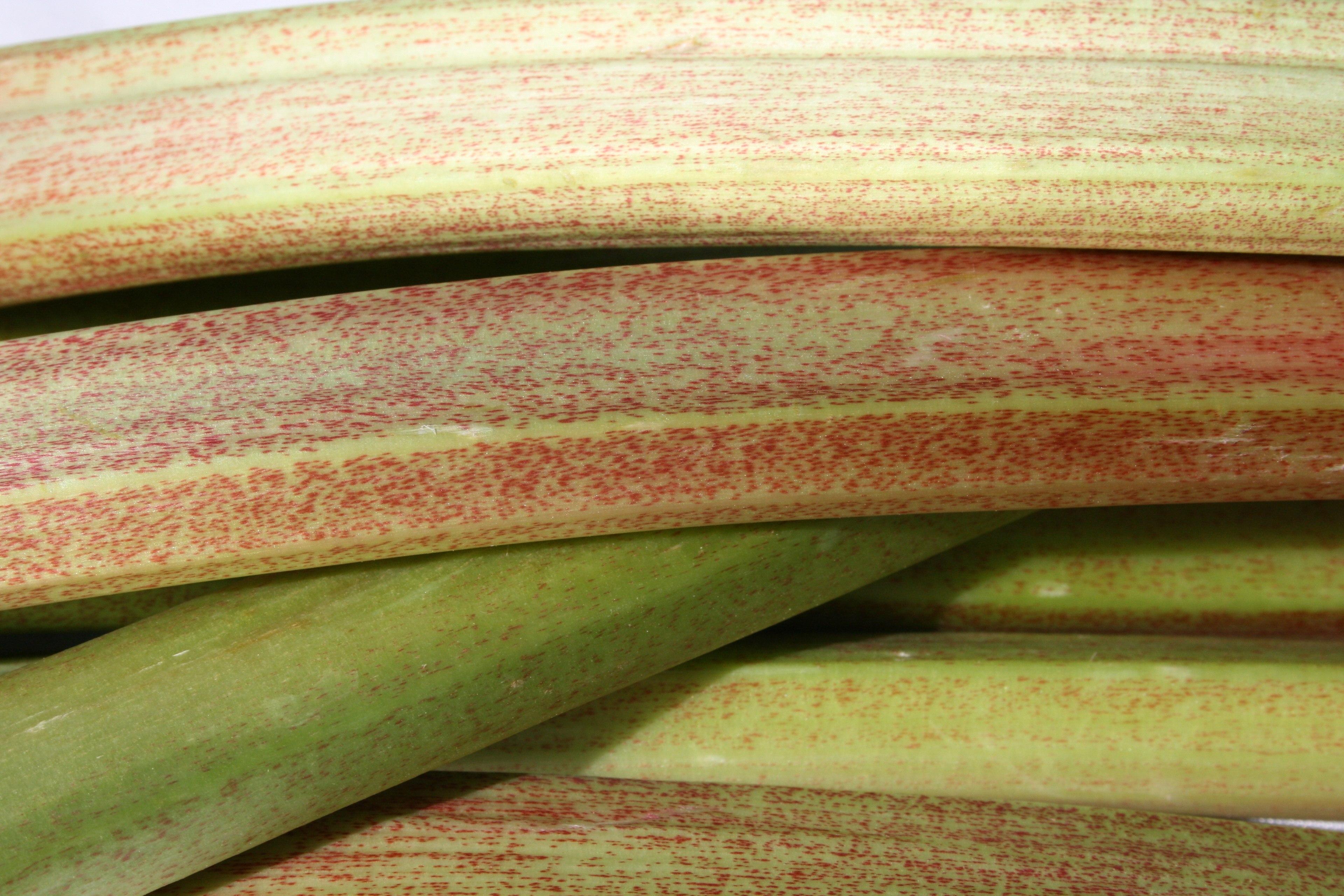 Rhubarb - close up.jpg