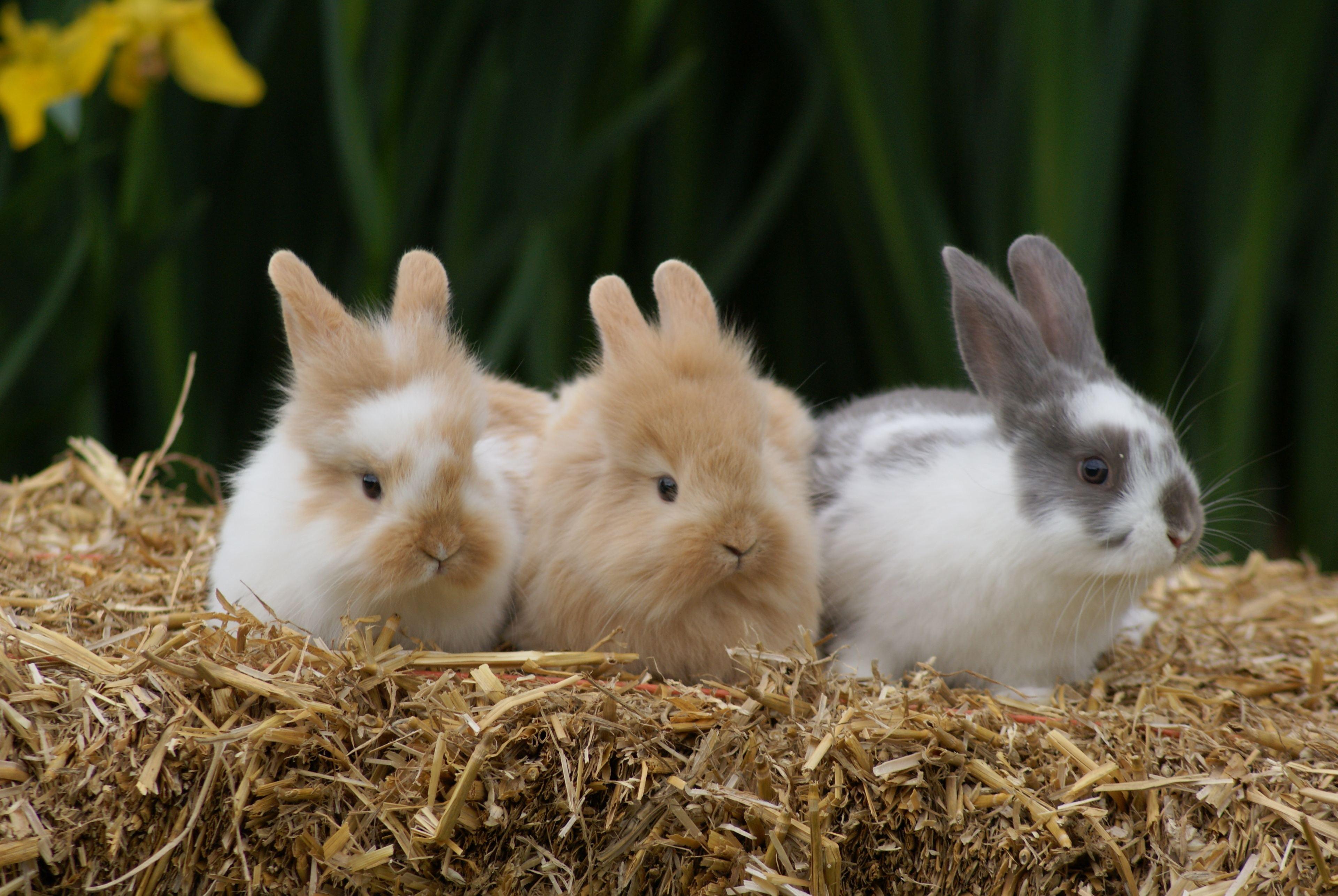 Violet and bunnies 033.jpg